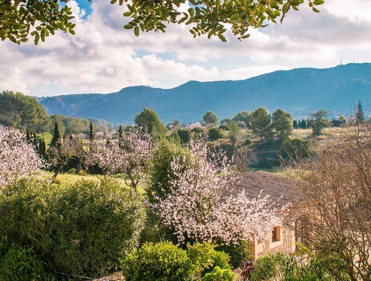 almond blossom fileds 740x560 - 9 Photos, die Sie zu einem Besuch auf Mallorca im Februar animieren werden